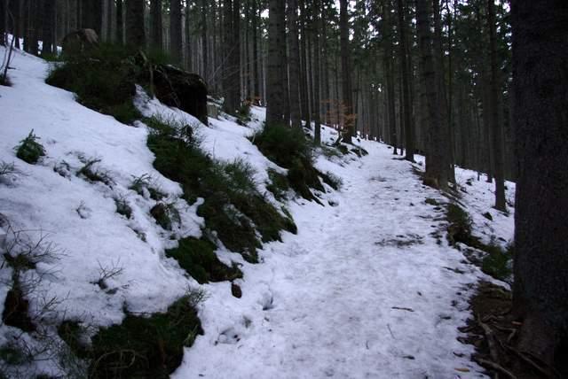 Krowiarki, szlak na Babią Górę