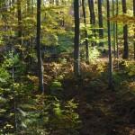 Beskidzkie-lasy