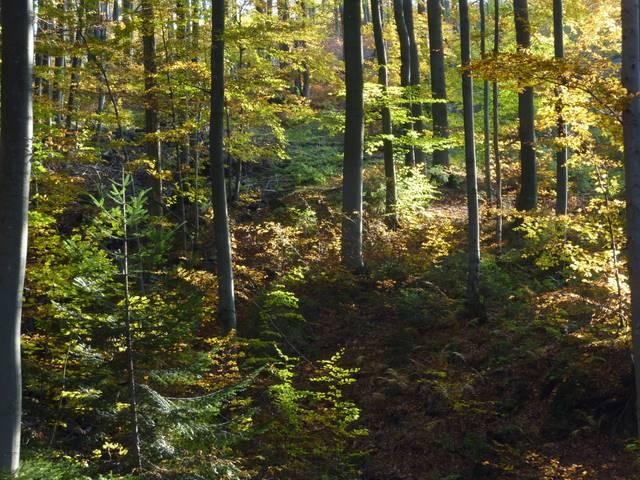 beskidzkie lasy jesień