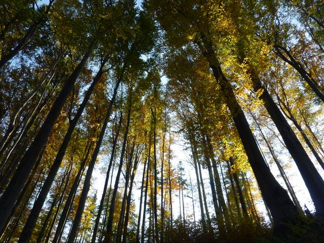 Beskidzkie drzewa