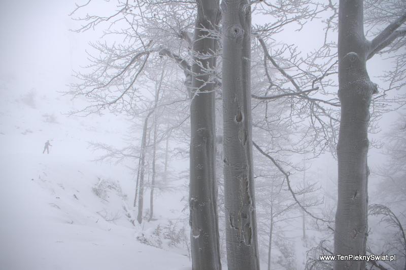 biało i mglisto, wycieczka narciarska
