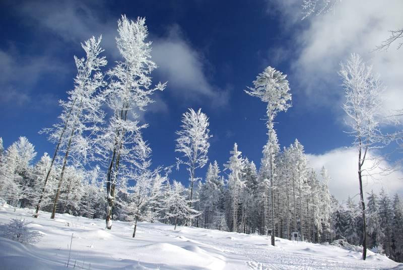 Beskid Śląski, szadź, buki ,wycieczka narciarska