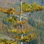 jesienny-buk