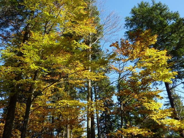 beskidzkie lasy, jesień, kolory