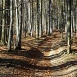 las-bukowy-beskidy