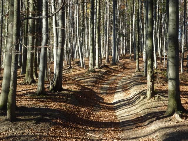 Beskid śląski jesień
