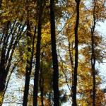 las-jesienia-gory