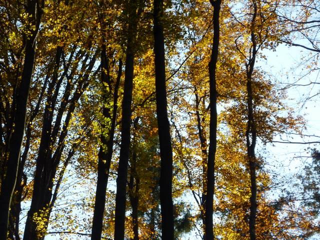 jesień beskid śląski