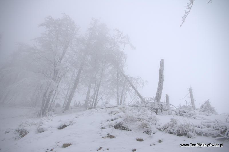 połamany las, Beskidy