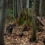 w-lesnych-ostepach
