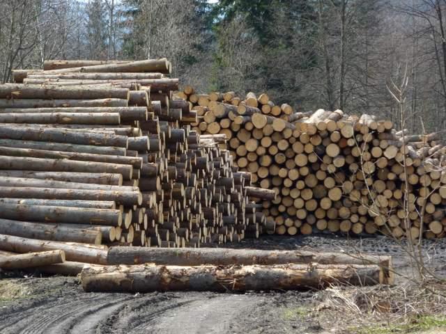Wyrąb lasów, Wisła