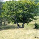 odpoczynek-pod-drzewem