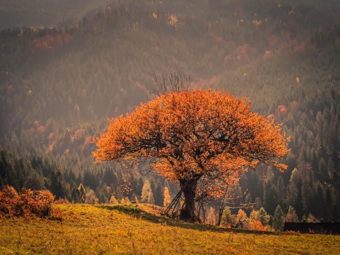 złoty kolor drzew