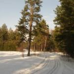 Bor-na-Czerwonem-trasy-biegowe