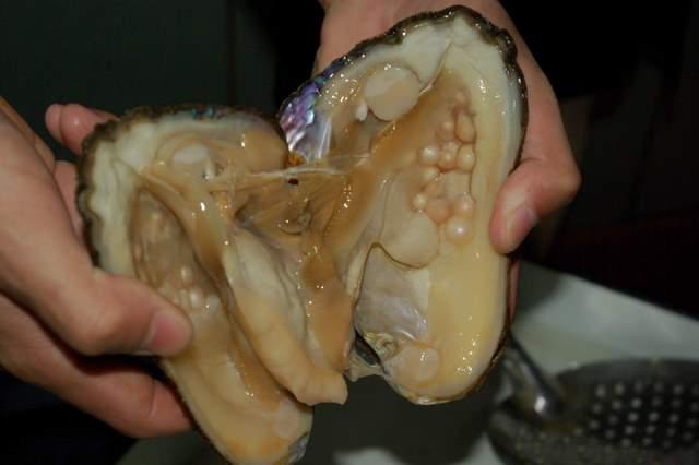 małże słodkowodne, perły