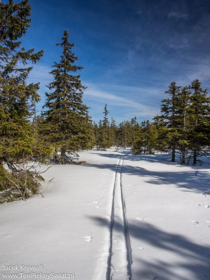 zakładanie śladu narciarskiego