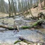 Dolina-Mnikowska-rzeka-Sanka