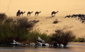 Nil-pustynia-wielblady