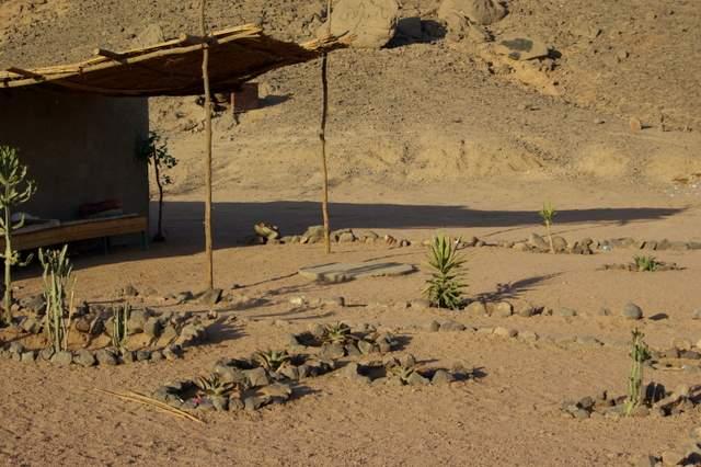 wioska beduinów, ogódek