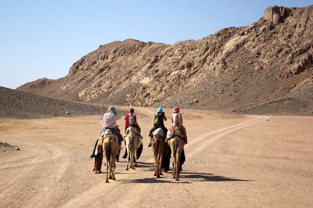 Wielbłądy, safari po pustyni