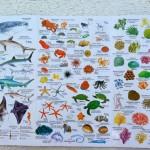 zwierzeta-morskie