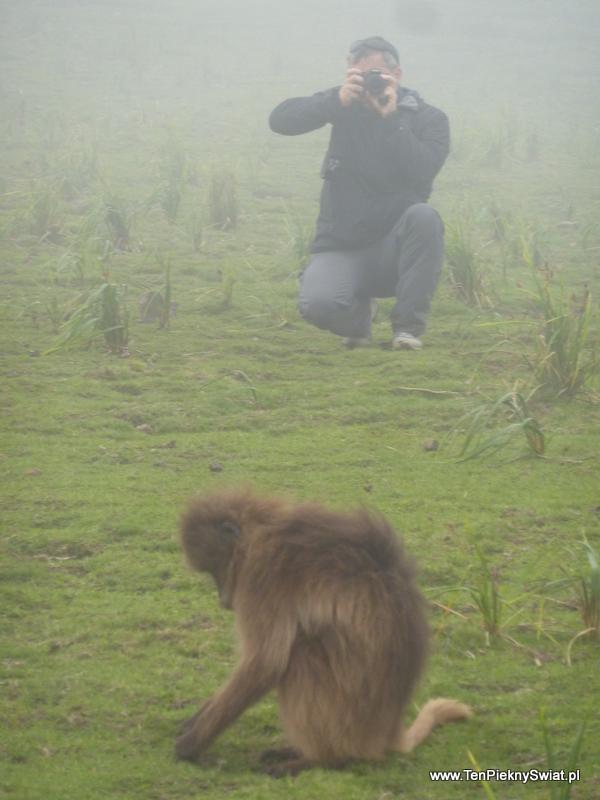 galady galada baboons