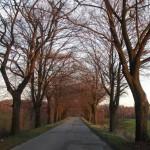 droga-czechowice-ziemiecice