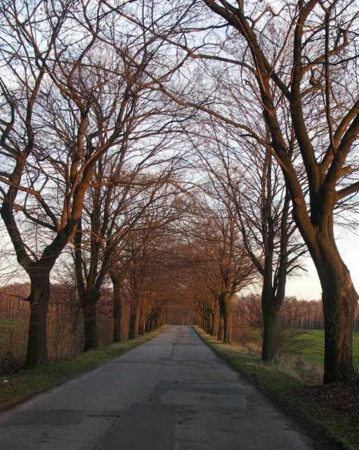 Droga asfaltowa Czechowice - Ziemięcice