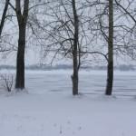 Plawniowice-drzewa