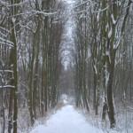 Plawniowice-szlak-wokol-jeziora