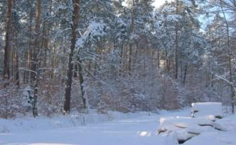 Rachowice-las-zima