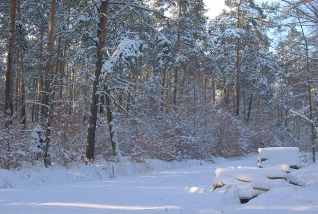 Las zimą w Rachowicach