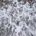 masa-sniegu