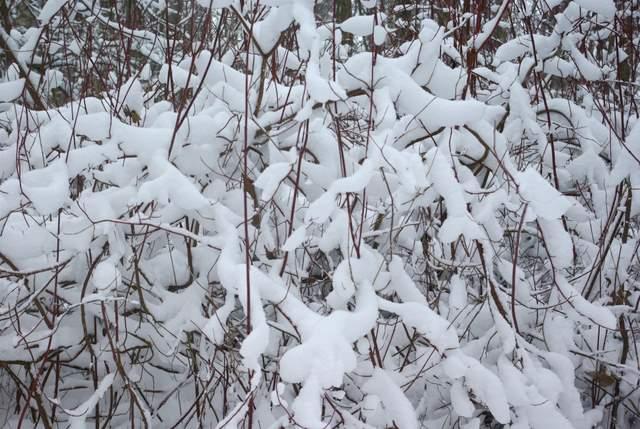 śniegu było wszędzie dużo