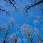 widok-nieba-i-drzew-przedwiosnie