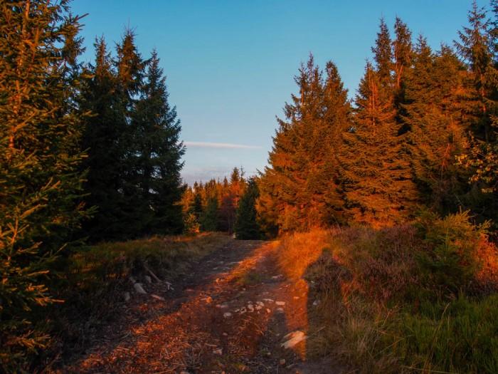 Szlak na Turbacz tuż przez zachodem słońca