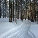 trasa-biegowa-Jagodna