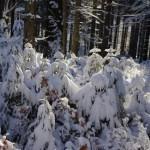 gory-izerskie-snieg
