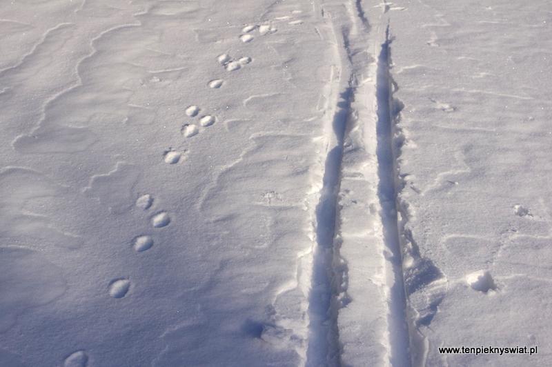 ślad narciarski Góry izerskie jakuszyce
