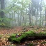Gory-Opawskie-jesienia