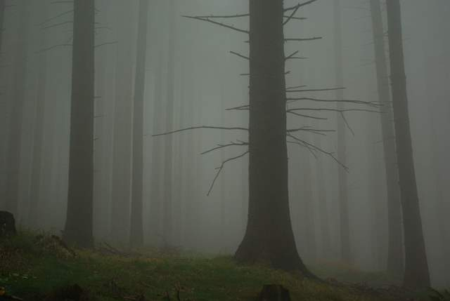 Góry Opawskie we mgle