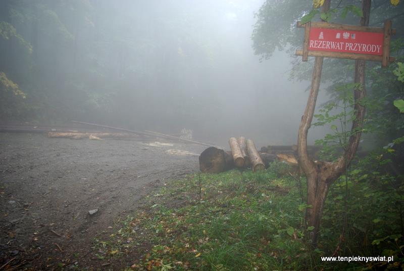 Góry Opawskie rezerwat wycinka drzew