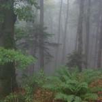 puszcza-gory-opawskie