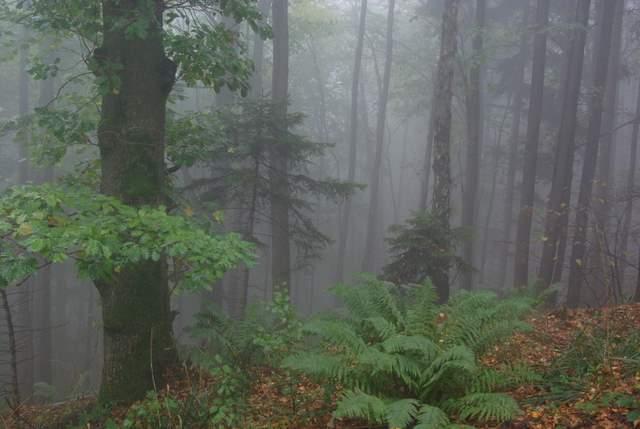 Góry Opawskie, puszcza