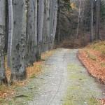 sciezka-rowerowa