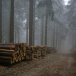 wycinka-drzew-w-rezerwacie