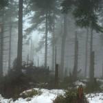Gory-Sowie-bory-swierkowe