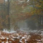 jesien-w-Gorach-Sowich
