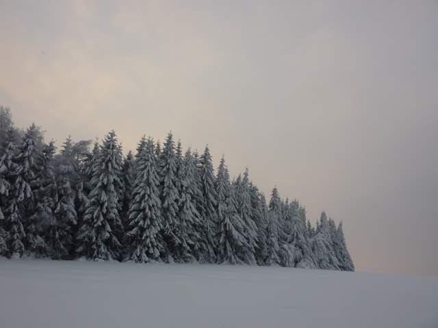 Pasterka zimą