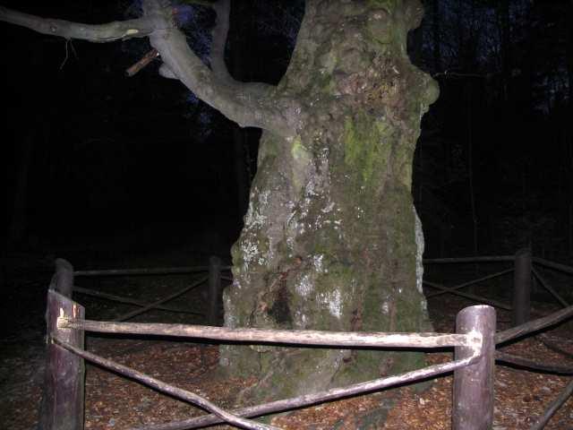 Buk Jagiełły - Świętokrzyski Park Narodowy
